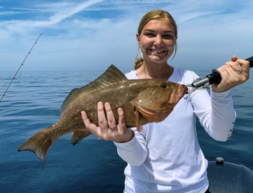 Quick Facts: Grouper