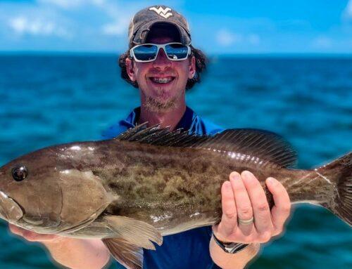 Bradenton Fishing In August. Grouper? Yep.